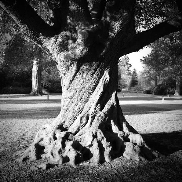 Twisty Tree by nclark