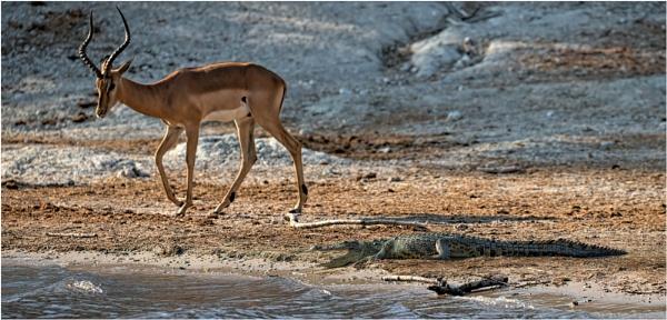 Beware of the crocodile by mjparmy