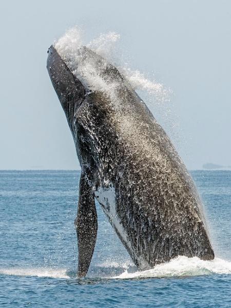 Hump back Whale by Jamie_MacArthur