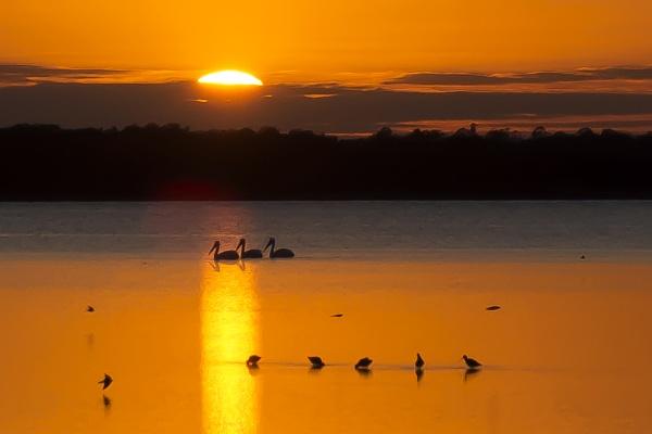 Birds at sunset by jbsaladino