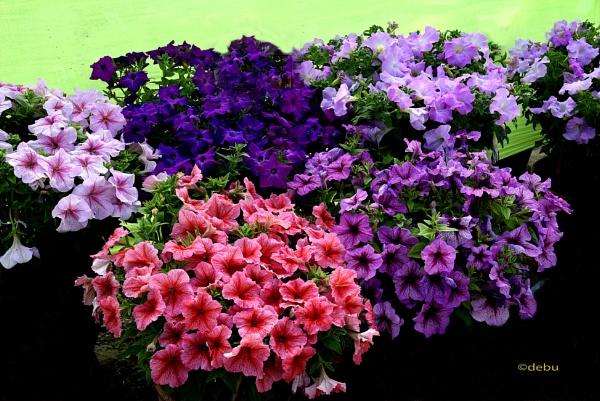 Beautiful Flowers..2 by debu