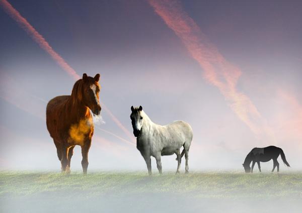 Horses at Dawn by SamCampbell