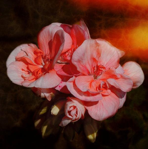 Burning Desire by sweetpea62