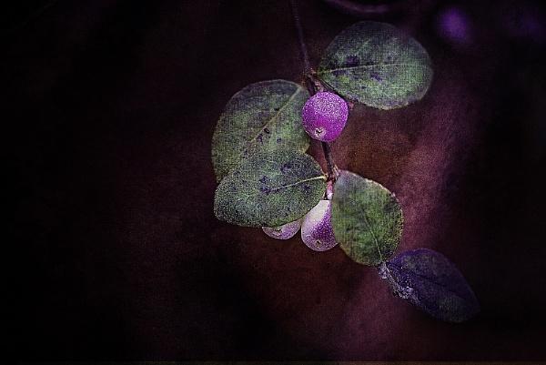 Berries by akh