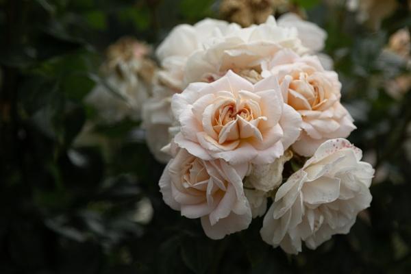 Peach Halves by Fefe