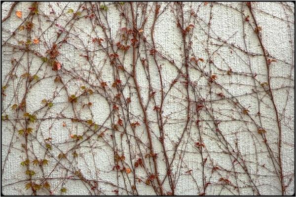 springsprouts 2 by FabioKeiner