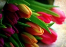 Colourful tulips by pentaxpatty at 29/01/2020 - 5:43 PM