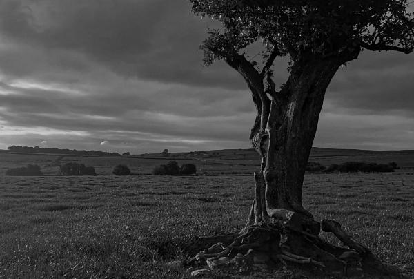 Tree\'s View by protrekker1