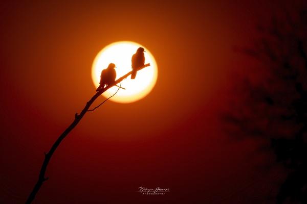 Beautiful Sunset by BUMBA