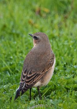 A bird along the coast in Somerset.