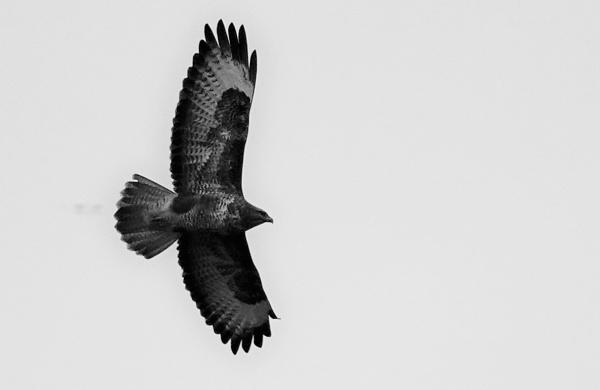 Wings. by frogs123