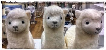 Llamas without Pyjamas