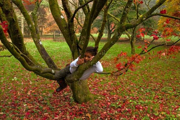 Enjoying the Autumn Tree by Janetdinah