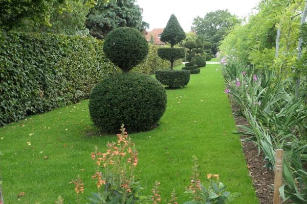 Topiary at Wisley by Janetdinah