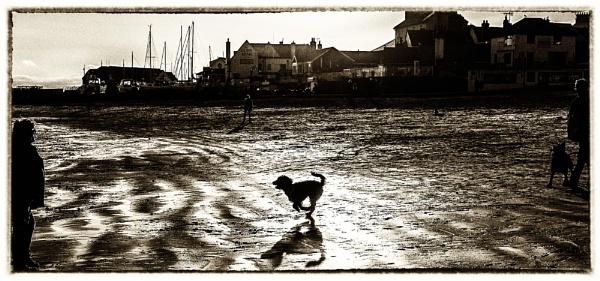 Dog Running - Lyme Regis Beach by starckimages
