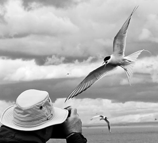 Tern Photographer On Farne Islands. by Debmercury