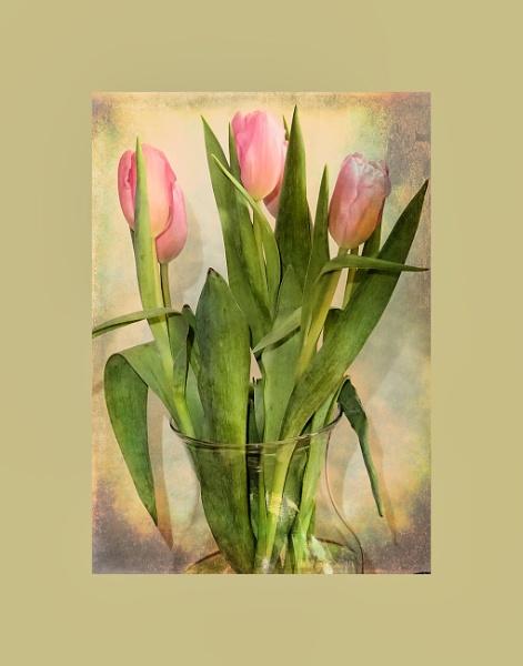 Tulips by Joline