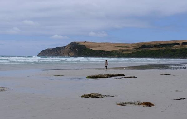 Shelly Beach by robst
