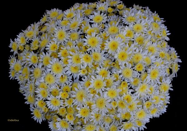 Beautiful Flowers..4 by debu