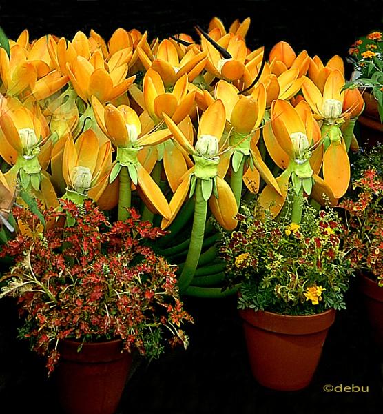 Beautiful Flowers..5 by debu
