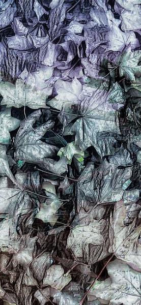 Foliage by RLF