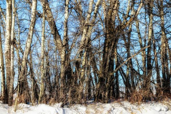 Frozen by FrancisChiles