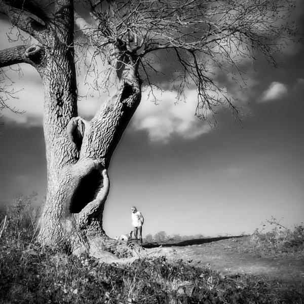 Ye Olde Tree by pauljt