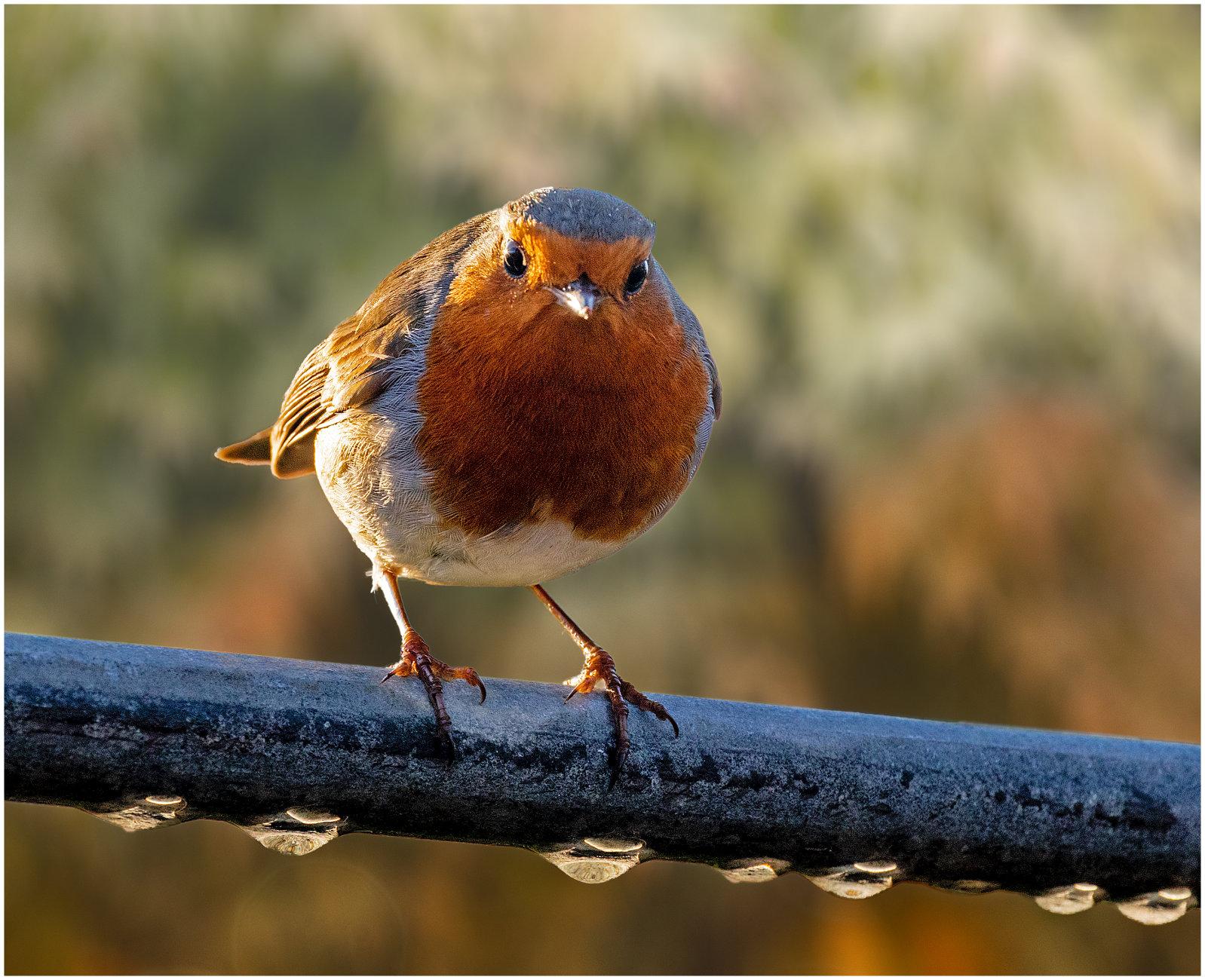 Easy Birding