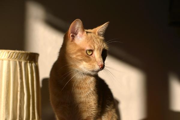 My cat.. by luminus