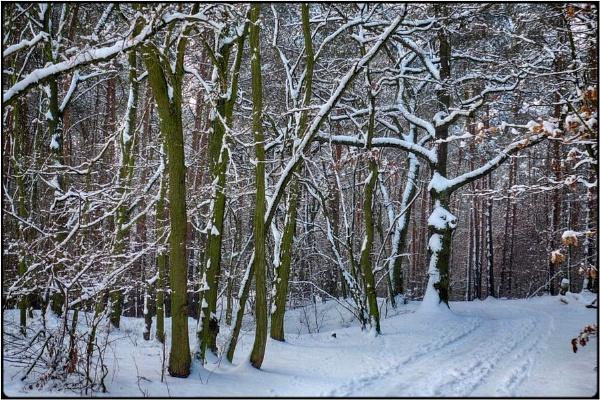 winterwood 3 by FabioKeiner