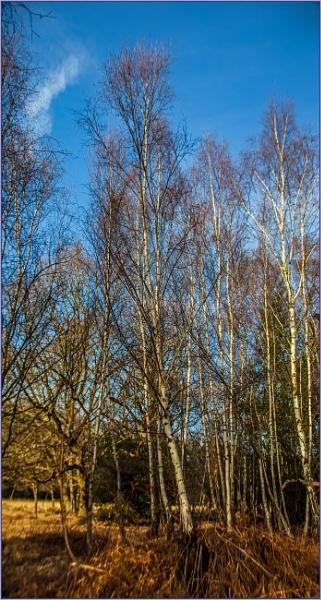 false Spring... by estonian