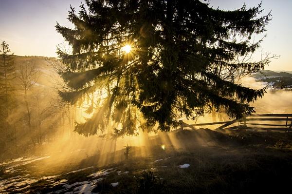 Rays by Bogdan255