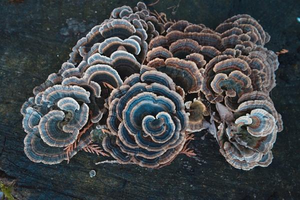 Fungus by Fbenjamin