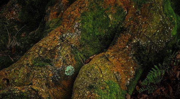 A spot of Lichen by fredsphotos