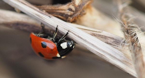 Ladybird by cattyal