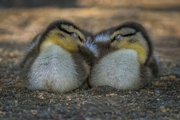 Peaceful Snooze by HoiPolloi
