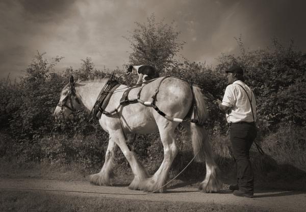 Horse Power by GeoffRundle