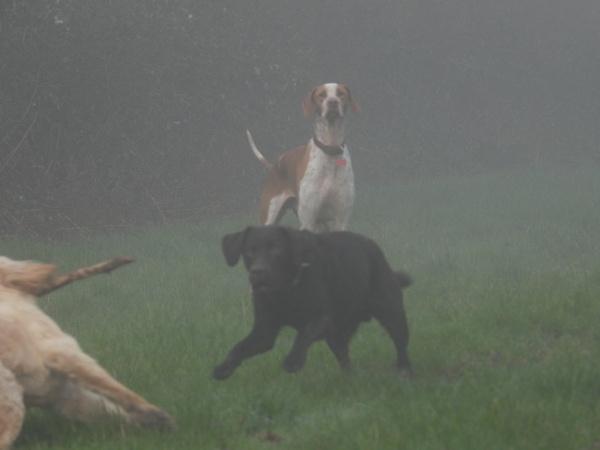 Dogs in the Mist by GaryLav