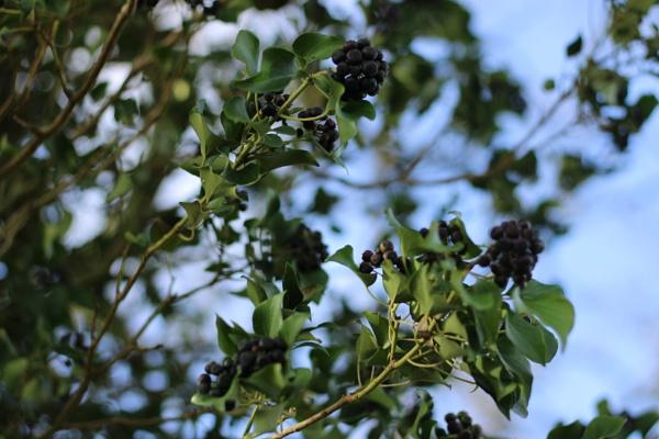 berries by LaurenFPhotos
