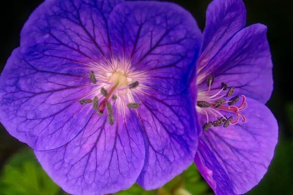 Flower power by alandeja