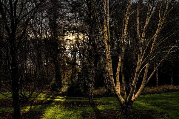 Warm Winter Sun by scrimmy
