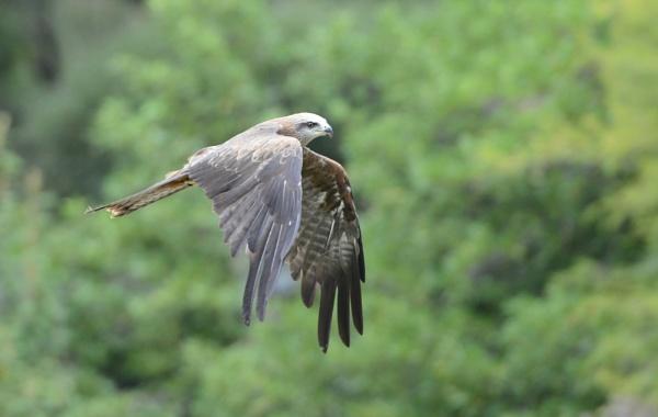 Bird in flight by Dugs