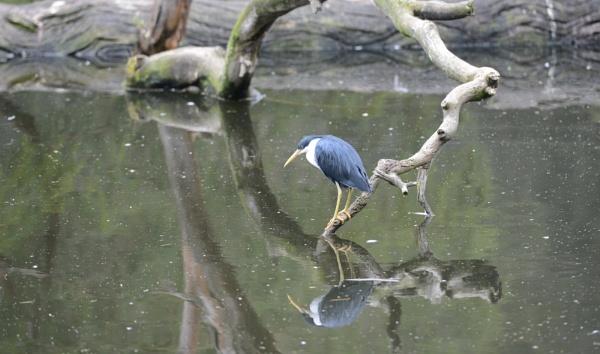 bird by Dugs