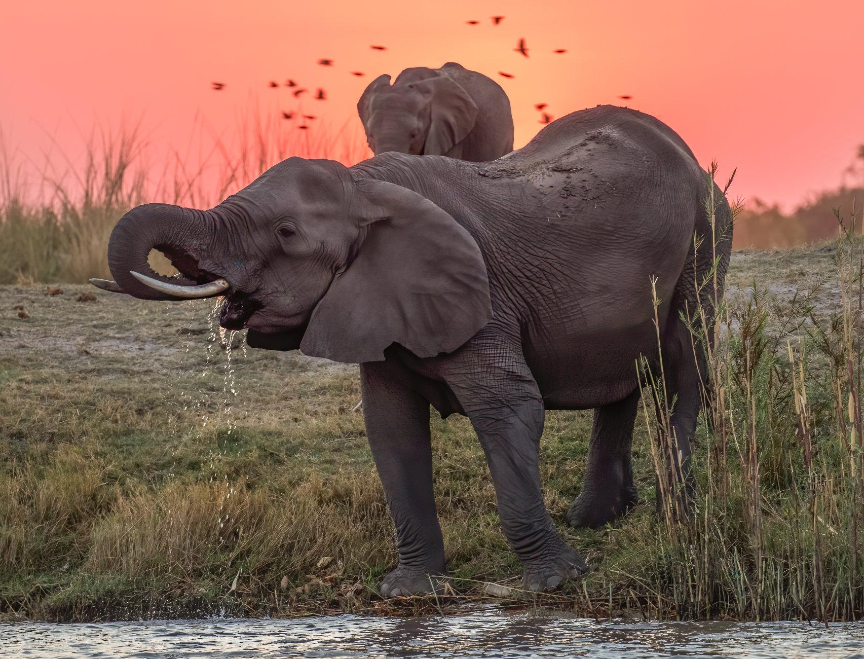 Evening drinks on the Chobe