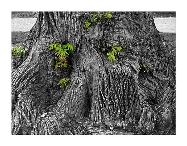 Paris Tree Bark by Lontano