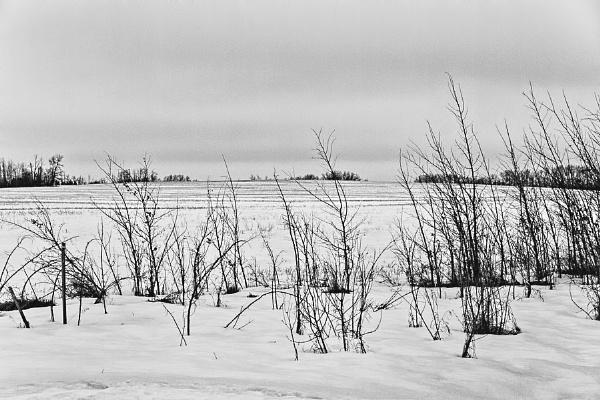 Field in Winter by FrancisChiles