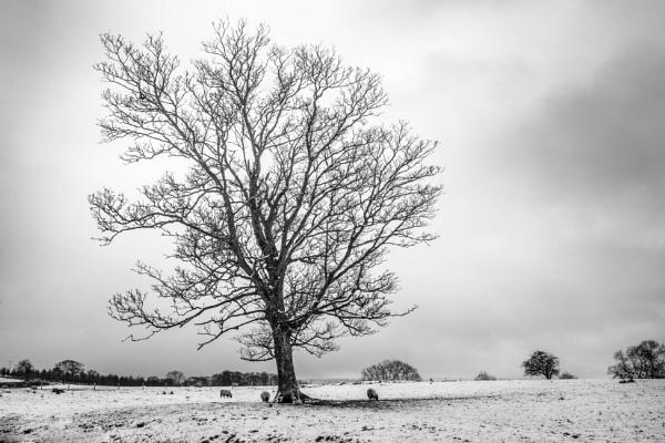 Winter Scene by mbradley