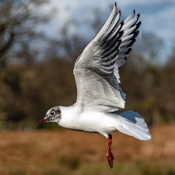 Landing by jimobee