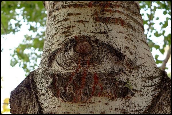 the spy-tree by FabioKeiner