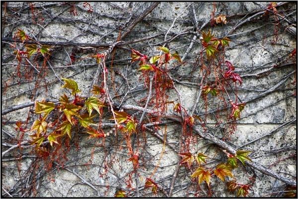 springsprouts by FabioKeiner